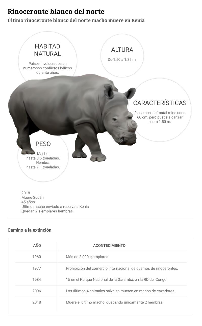 el xito del rinoceronte premium
