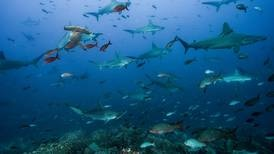 Costa Rica impulsará convenio internacional para la conservación del Pacífico