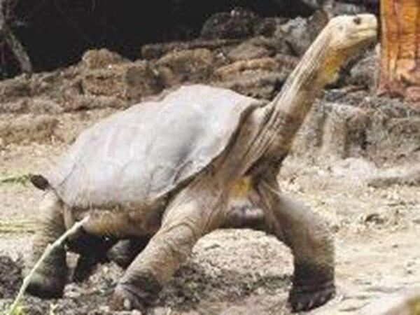 Con la muerte de George, se creyó que la especie se había extinguido.   EFE.