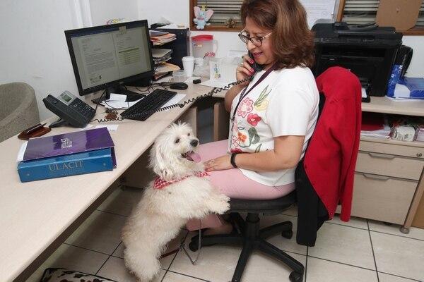 Kathy Hernández es una de las funcionarias de la Ulacit que lleva a su perrito, Copito, al trabajo. Fotografía: John Durán