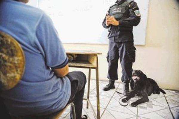 Kena, el labrador de la Unidad Canina K-9, olfateó con rapidez dos aulas del liceo y no halló drogas.   MAYELA LÓPEZ