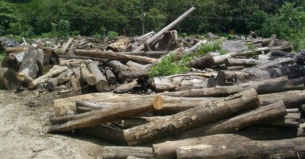Deforestar es despojar un terreno de plantas forestales, según la Real Academia Española