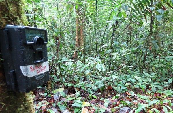 Las autoridades colocaron cámaras en la reserva donde habita el jaguar para vigilar sus movimientos.
