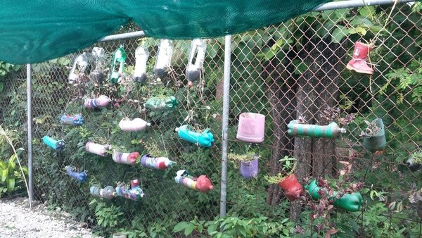 Parte de la huerta de la escuela Julia Acuña de Somarribas, en El Salto de Liberia.