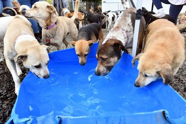 Los territorianos son perros de todo tipo, tamaño y raza. Ellos han aprendido a convivir. Foto de Jorge Castillo.