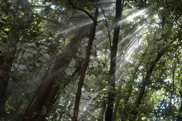 """El dinero producto de la venta de """"bonos de carbono"""" permitirá mantener los bosques del país."""
