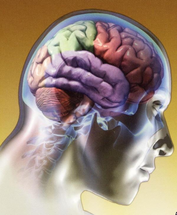 Cambios en la flora intestinal afectan el cerebro, al punto, de generar trastornos, como ansiedad y depresión.