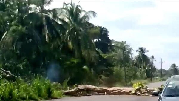 Un hombre derribó un árbol sobre el tendido eléctrico, en el sector de Vizcaya, Limón, con la intención de bloquear al paso de vehículos.