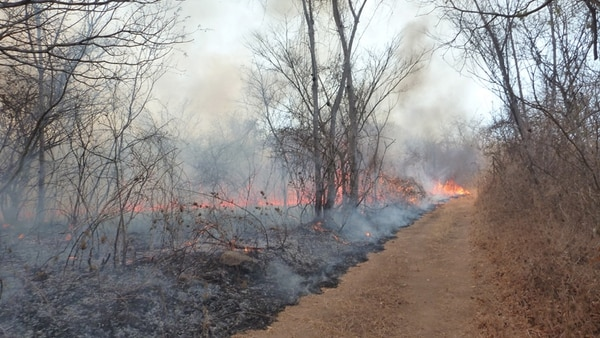 El fuego se desarrolla en la Estación Experimental Forestal Horizontes, propiedad privada en Guanacaste. En una parte de la finca (a la que no habían llegado las llamas ayer), hay un vivero con árboles nativos.   CARLOS VARGAS