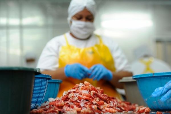 El ordenamiento de la pesca de camarón también busca garantizar empleo en las zonas costeras del país.   PABLO MONTIEL /ARCHIVO