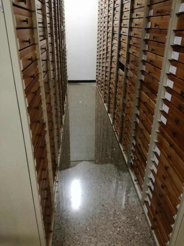 La falta de drenajes del edificio provoca constantes inundaciones. En algunos casos, cuentan los funcionarios, esta ha llegado a caer sobre los anaqueles donde yacen las colecciones de insectos. Foto: Museo Nacional para LN.