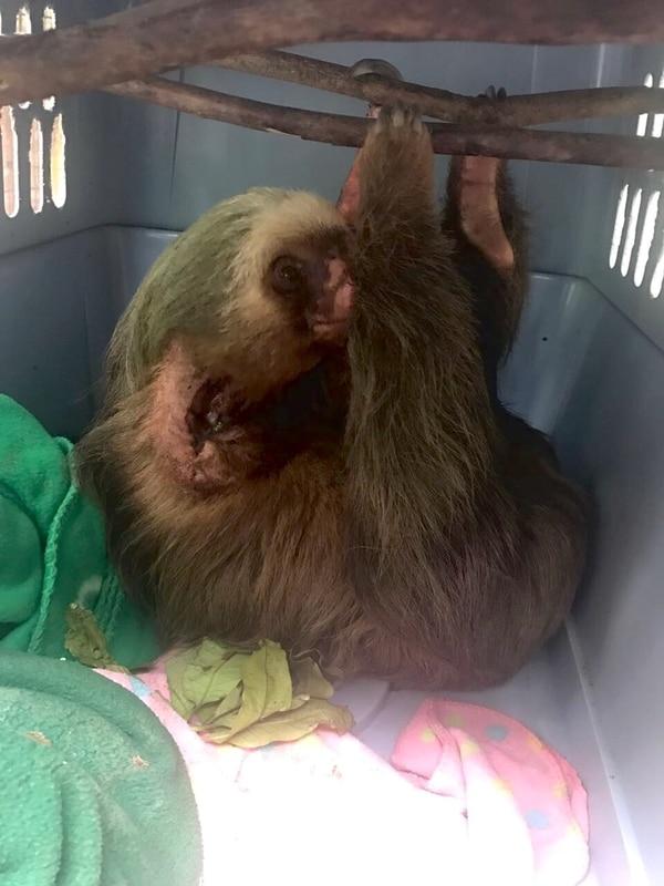 Los veterinarios monitorean la evaluación para ver si puede regresar a su vida normal.