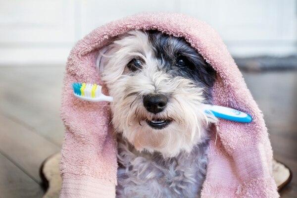 Los perros deben asociar el lavado de los dientes con algo agradable, no con un castigo. Shutterstock
