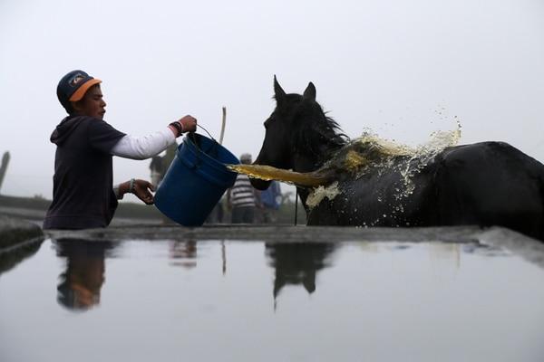Natael Loría lavó ayer la ceniza que le cayó a uno de los caballos en la lechería de la familia Montero, en La Central de Turrialba. Este peón es uno de los 10 que se mantienen en ese poblado, a 6 km del cráter. | CRISTIAN ARAYA