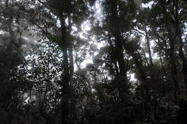 Bosques primarios de Costa Rica