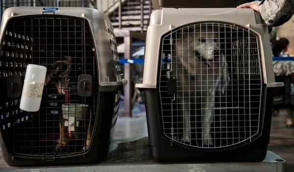 El viaje de mascotas en aviones puede ser en la cabina de pasajeros o en el depósito de equipaje pero siempre en un trasportín o jaula de tela. (Imagen con fines ilustrativos)