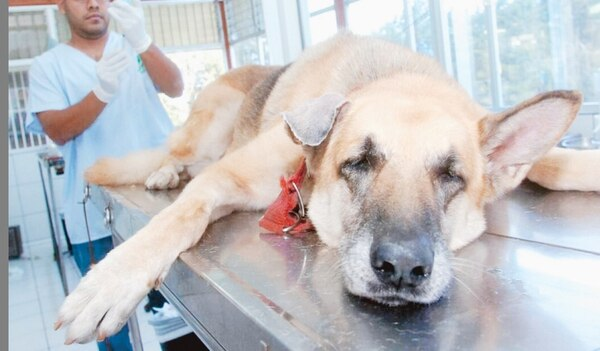 veterinario, perro, mascota, foto con fines ilustrativos