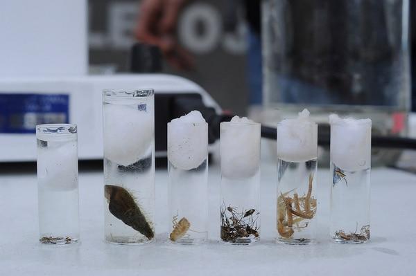 Conteo halló 331 especies de aves y plantas en La Sabana