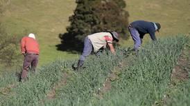Gobierno multará a empresas que contraten mano de obra en condición irregular