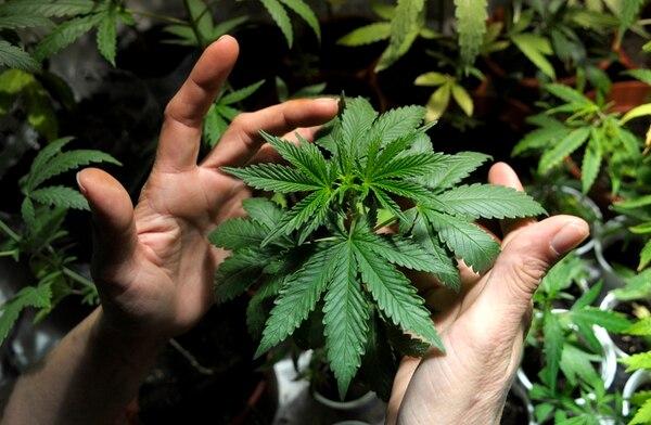 La industria estadounidense de la marihuana aún depende mucho del efectivo.
