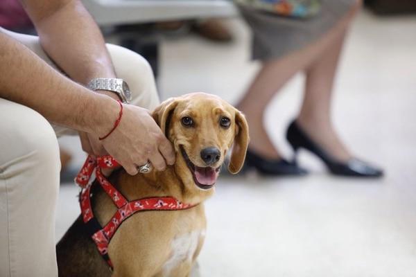 Perro Campeón, juicio por sufrir maltrato animal. Foto: Albert Marín