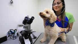 Vacunación también es fundamental para las mascotas