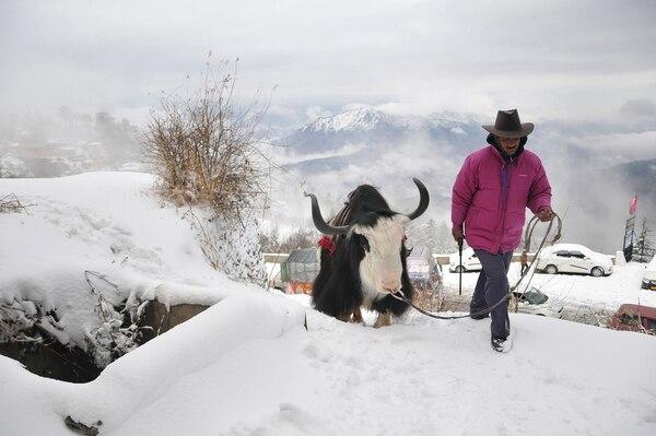 En esta foto de archivo tomada el 13 de diciembre de 2014, un hombre camina con su yak en un camino cubierto de nieve durante la primera nevada de la temporada en Kufri, a unos 17 kilómetros de la norteña ciudad de Shimla. Foto: AFP
