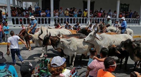 Todos los años, entre febrero y marzo, Liberia celebra su tope de toros, una tradición que no puede faltar en la celebración de sus fiestas cívicas. Foto: Mayela López/Archivo LN