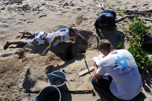 Nathan Robinson y su equipo excavan nidos que ya nacieron para ayudar a crías que pudieran quedar atrapadas. También toman datos que sirvan a la investigación.   ALONSO TENORIO