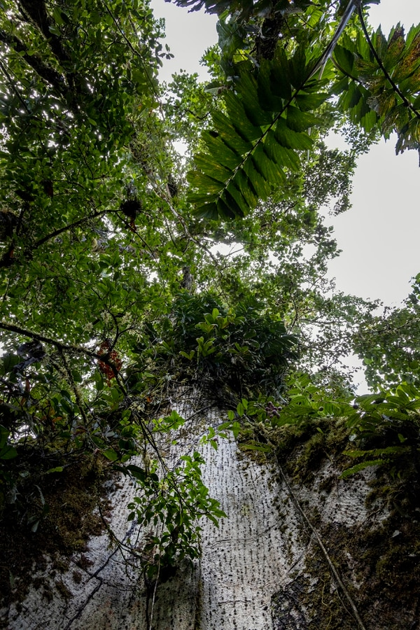 La densa vegetación plasma imágenes impresionantes para las retinas, pero también para los lentes de las cámaras fotográficas. Foto: Alonso Tenorio.