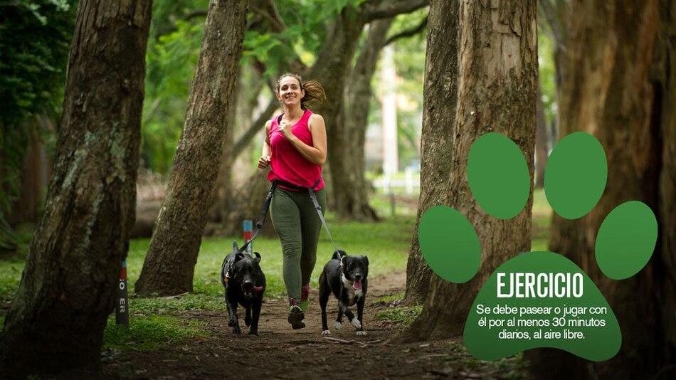 Tratar a los perros como humanos les causa ansiedad - La Nación
