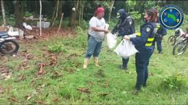 Autoridades intervienen Gallera en Upala