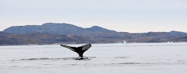 Uno de sus animales favoritos son las ballenas, con las que ha tenido la dicha de trabajar en distintas oportunidades.