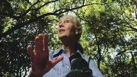 Jane Goodall: una vida por la conservación de los chimpancés