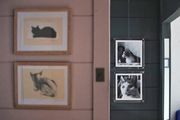 """La exposición """"Gatos 2"""" fue curada por el artista Hernán Arévalo, quien rinde un homenaje al grabador Rudy Espinoza. Fotografía: John Durán"""