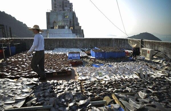 Los operativos de control y vigilancia, así como los dedicados a regular la comercialización, requieren fondos para combatir el aleteo, una de las causas de la disminución en las poblaciones de tiburones en el mundo.   AFP