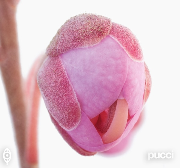 La técnica macro permite un acercamiento a las formas, texturas, arquitectura y colores, de cada pétalo, pistilo y filamento de las flores de los árboles. Foto: Editorial Pucci para LN