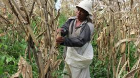 Empresas del agro se resisten a legalizar a empleados foráneos