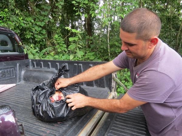Carlos Quirós, un vecino de la finca de Rogelio Barquero, encontró una bolsa con carne abandonada por los delincuentes.   CARLOS HERNÁNDEZ.