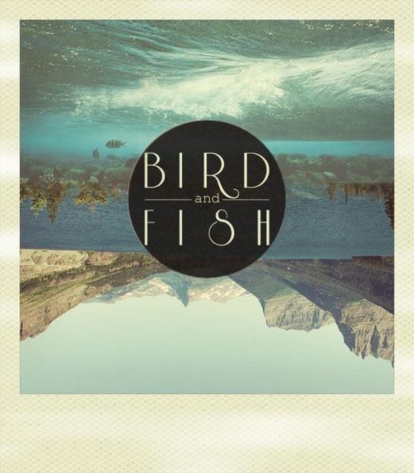 La portada del primer sencillo de Bird & Fish.