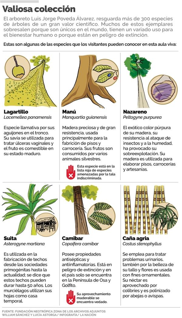 Comunidades De Osa Coleccionan árboles Amenazados Y De Gran Valor