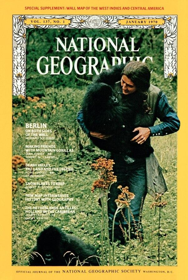 Se le atribuye haber salvado a los gorilas de montaña que estaban al borde de la extinción. Foto: Nat Geo
