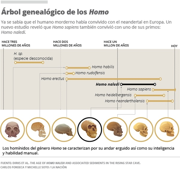 Infográfico: Árbol genealógico de los Homo