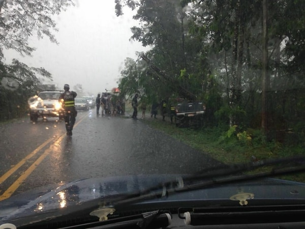 El accidente ocurrió en una recta. El árbol se quebró a raíz del impacto y cayó sobre el vehículo.