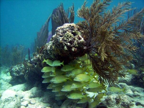 Los restos de las embarcaciones se han convertido en el hábitat de especies marinas