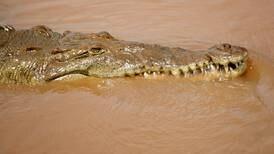 ¿Se atreve a navegar el Tárcoles? Descubra los secretos del río de los grandes cocodrilos