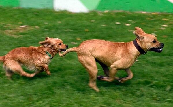 Dos perros rescatados juegan en el nuevo Centro de Transferencia Canina, en la ciudad de México.