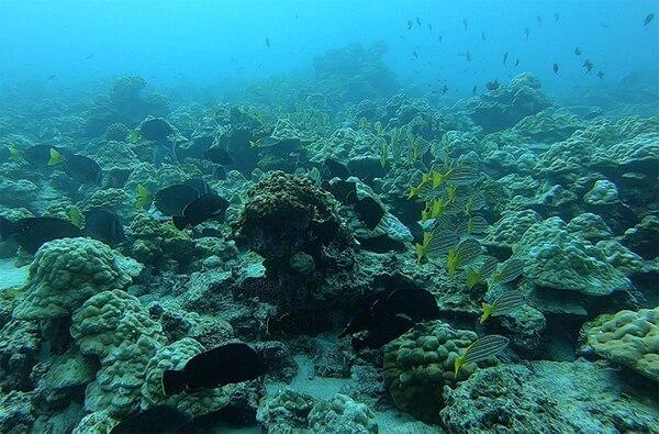 La Isla del Coco cuenta con una vibrante vida submarina, la cual no se limita a los tiburones. Fotografía: John Durán