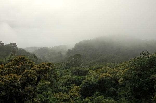 Un 3% de la madera que se usa en el país es de bosques. | ARCHIVO