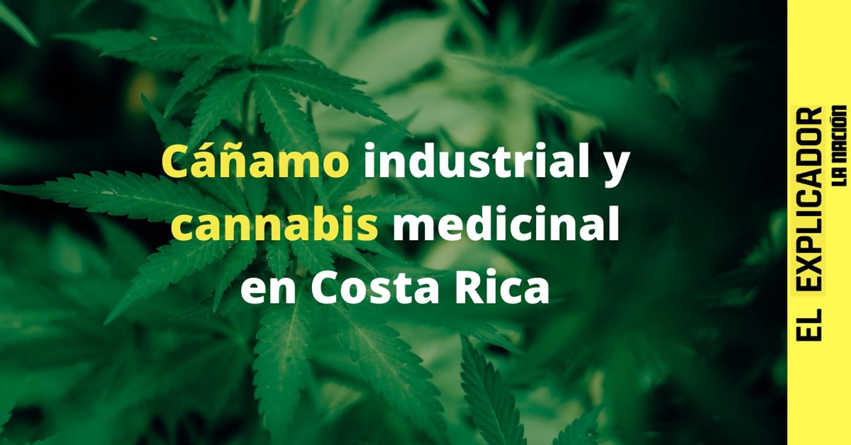 El Explicador | Todo sobre el proyecto del ley del cáñamo industrial y el cannabis medicinal en Costa Rica